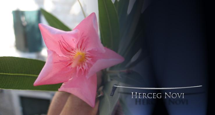 cvijet-herceg-novi